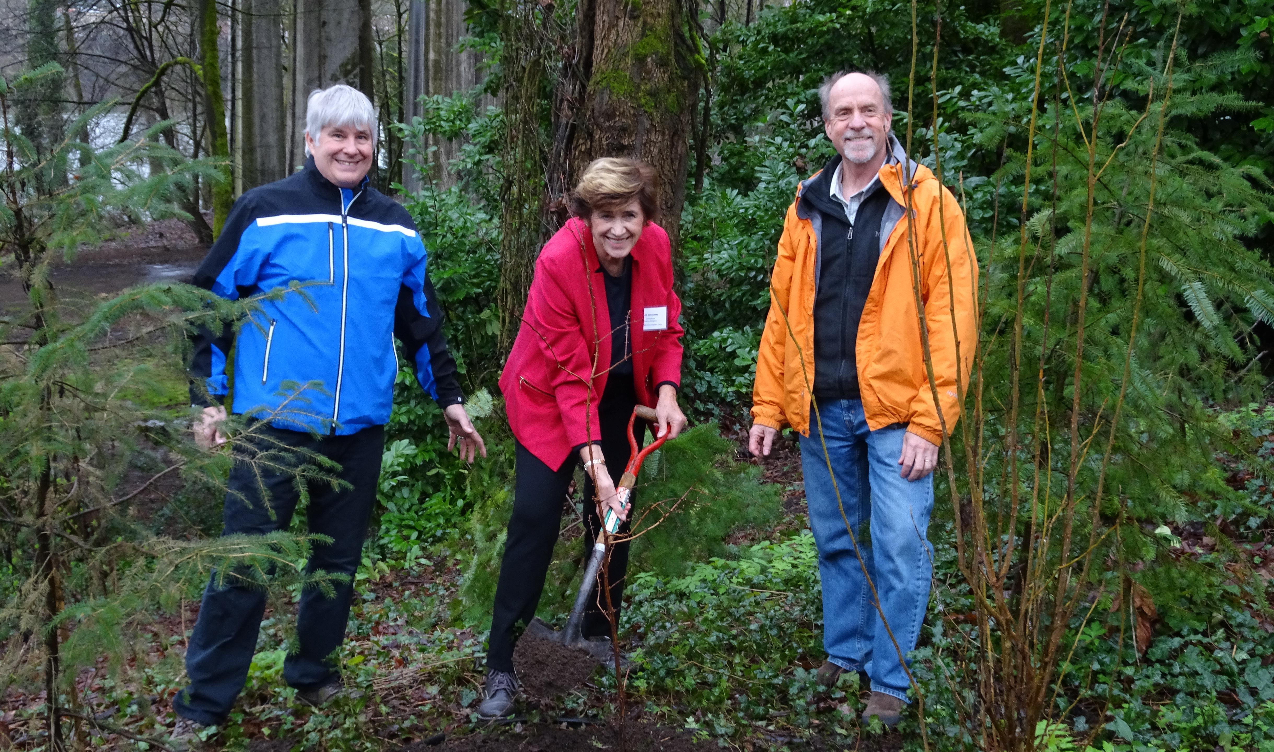 Dawn Redwood Planting